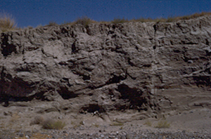 Stratigraphy of Coulee wall at Big Bend 1951