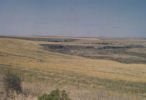 Coulee meander 1951