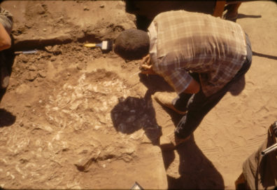 Excavating shell lens at top of stratum 6, Area A, August 1967