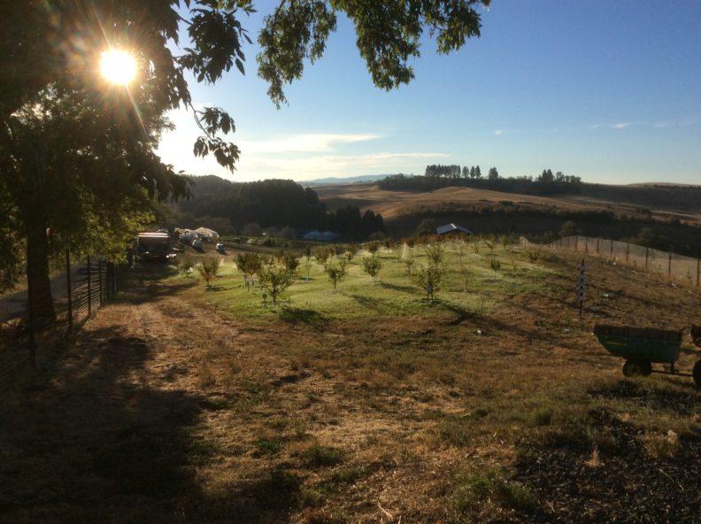 A photo of Eggert Organic Farm with trees, a fence, and a wheelbarrow