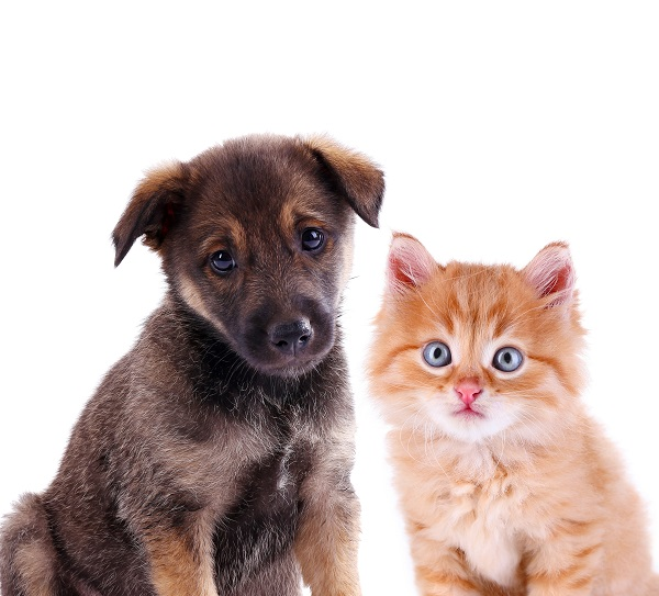 Funny puppy and blue-eyed kitten