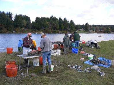 Local volunteers monitoring shellfish