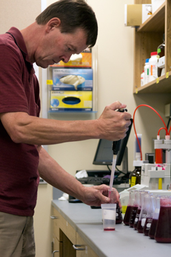 Richard Larsen at the lab bench pipetting grape juice in preparation for analysis.