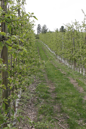Researchers are hot on the trail of innovations that will improve orchard efficiency.