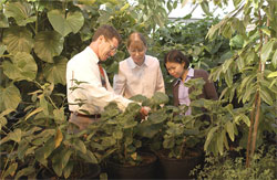 Professor Norm Lewis in greenhouse with graduate students