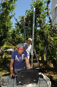 Orchard automation research is just one of the ways WSU scientists are working to keep the Washington tree fruit industry competitive.