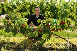WSU scientist Matt Whiting is a tree fruit physiologist and an orchard architecture innovator. Photo by Bob Hubner/Washington State University.