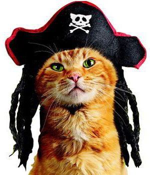petcostumes-piratecat