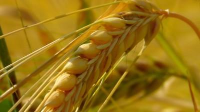 cereals-163312_1920