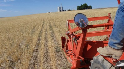 Harvesting hard red winter wheat at the western trial site in 2008 yielded 16 bushels per acre.