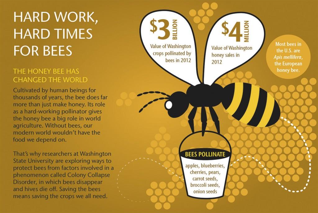 Bee Illustration 1