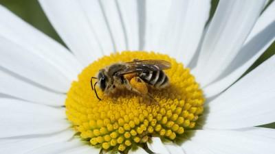 Bee n Daisy_2960