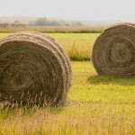 Hay languished in the fields this year while farmers waited for dockworkers to settle their contract dispute with West Coast port operators.Credit: Flickr User Charlie Bird