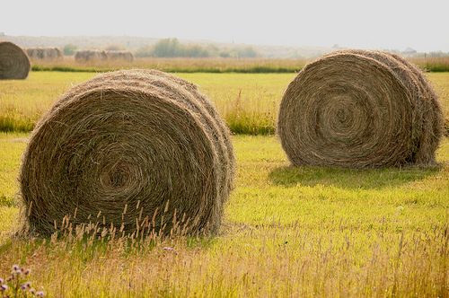 Hay languished in the fields this year while farmers waited for dockworkers to settle their contract dispute with West Coast port operators.	Credit: Flickr User Charlie Bird