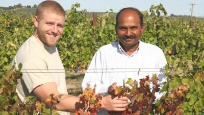 Schultz and Rayapati[10] Crop