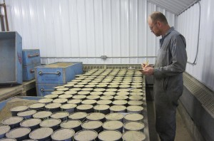Lind today: John Jacobsen, agricultural research technician, checks for emergence in an experiment at WSU's Dryland Research Station. (WSU photo)