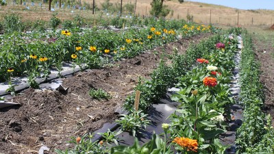 Organic farming and composting methods are the topic of a tilth workshop August 3 at WSU's Eggert Farm.