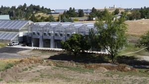 The new facility (bays on the right) expands greenhouse space for small grains on the Pullman campus by approximately 50 percent.