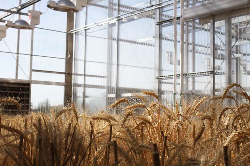 Experimental Crops At The Newly Expanded State Of Art Plant Growth