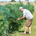 WSU alum Robb Zimmel works in a vineyard. Zimmel is a former U.S. Army Reserve medic.