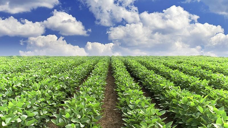 Field crop rows