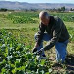 FransenWSUProsser crop