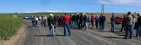 Growers, industry representatives and researchers tour oilseed fields in Douglas County.