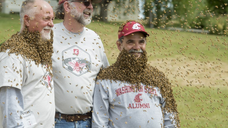 WSU entomologists Steve Sheppard, left, and Tim Lawrence join WSU provost Dan Bernardo to help kick off a new campaign for a Honey Bee and Pollinator Research Facility.