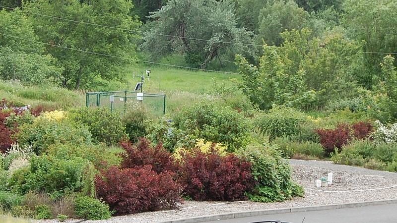 Rain gardens brighten up the landscape at WSU's stormwater center at the Puyallup Research and Extension Center near Seattle.