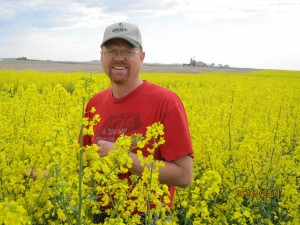 flowering crop of canola