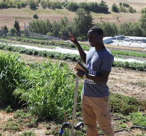 Graduate student Cedric Habiyaremye shares details on Eggert Family Organic Farm's efforts to grow millet,