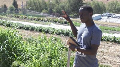 Cedric millet crop