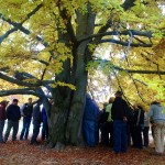 See how the urban forest helps cities stay healthy and livable at an upcoming breakfast and walk (WSU photo).