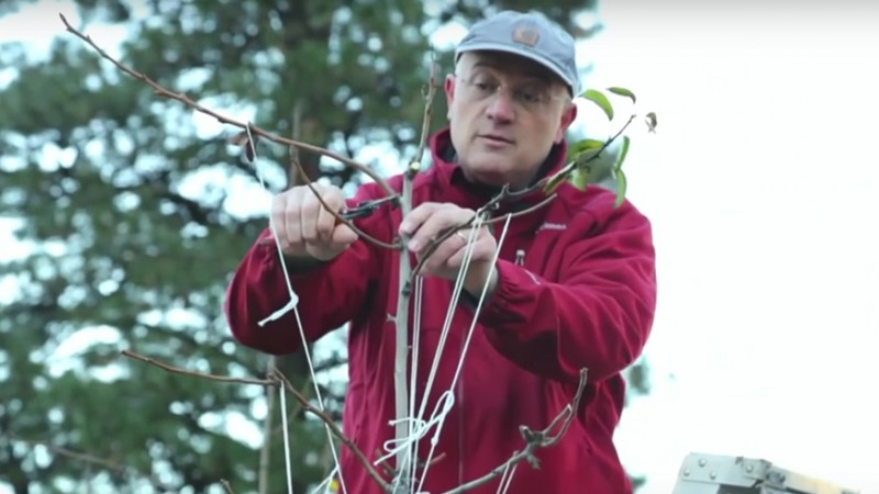 stefano-pruning-w1