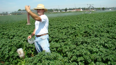 WSU Extension educators are working to help growers save water, both in Skagit Valley's potato fields, and statewide.