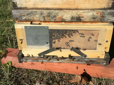 Bees forage on a warm November day. Screens protect the hive from intruders, but must be removed before winter.