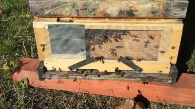 hive-entrance-crop-wide