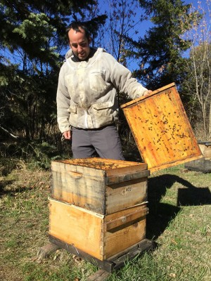 WSU technician Philip Baker examines a hive this fall.