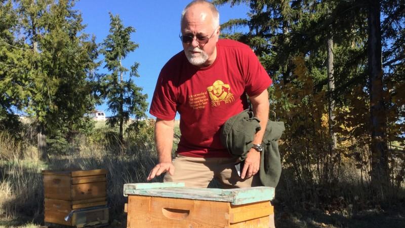 steve-w-hive-crop-wide