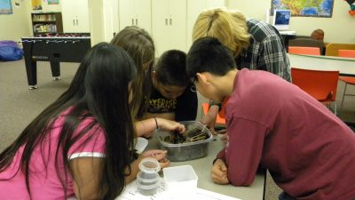 Students dig through compost to find different components with a Spokane County Master Gardner.