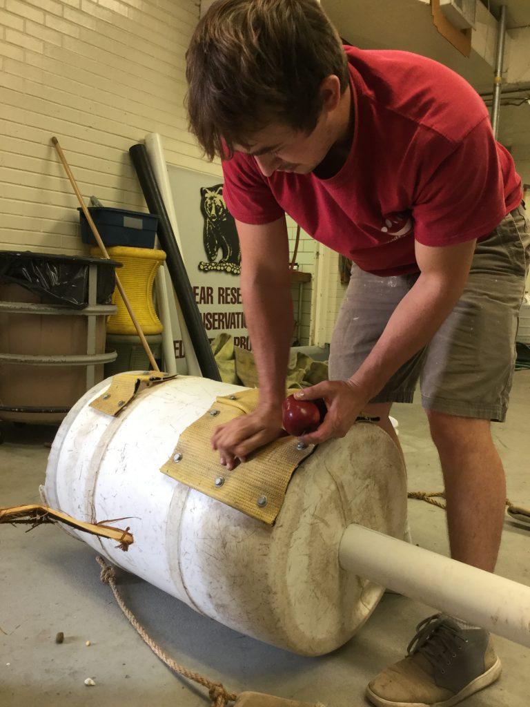 Brandon Evans Hutzenbiler stuff apples into the holes in a barrel.