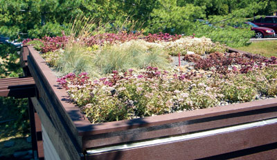 Green roofs like the one covering the display garden's storage building absorb rainwater, provide insulation, create wildlife habitat and help to lower urban air temperatures.