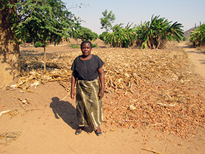 A local small-holder farmer standing beside her conservation agriculture plot in Rumphi district near Vwaza Wildlife Reserve.