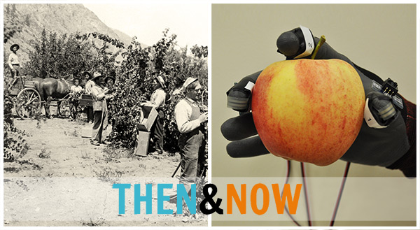 Apple picking then and now