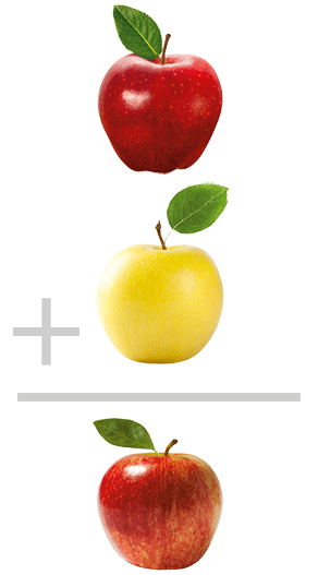 A red apple plus a yellow apple equals a red-yellow apple