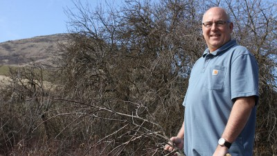 David Benscoter, an apple detective, holds a pruned branch of a 125-year-old apple tree found at Steptoe Butte. Directly behind him is a tree believed to be a formerly-thought-extinct variety called Nero. Seth Truscott/CAHNRS photo