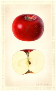 Steadman apple painting