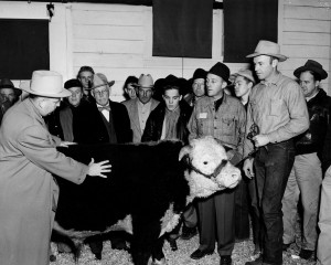 Bing Crosby, fourth from right, examines a bull during a judging event at the pavilion in the 1950s. M.E. Ensminger, Animal Sciences department chair, stands at left.