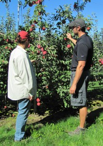 Kate Evans and WA grower Byron Borton looking at Cosmic Crisp tree in Quincy, Wash., September 2013.