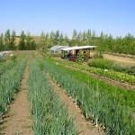 Tukey Farm